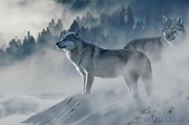 Духовные животные и их способности